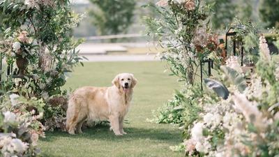 带宠物结婚 这份独一无二的祝福只属于养宠人